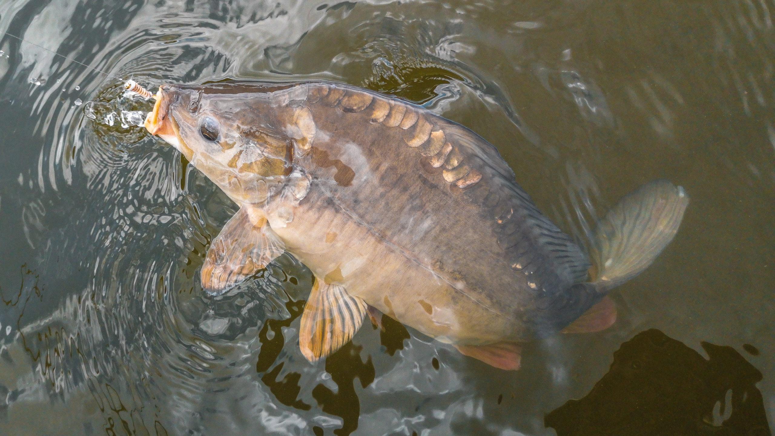 Guidings für Fliegenfischer