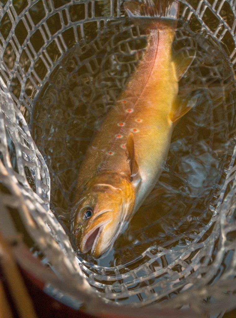 Unsere Initiative: Fish over Photo